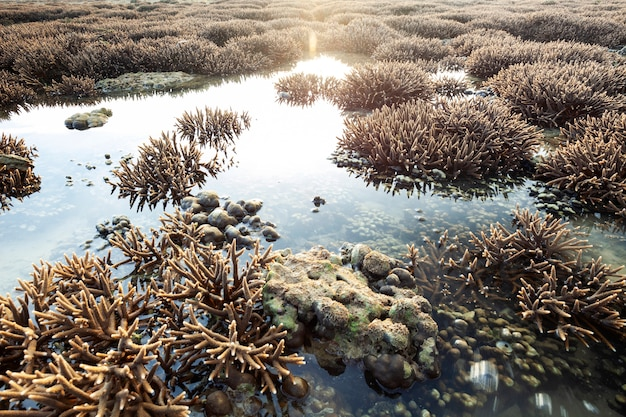 Beautiful coral reef during low tide water in the sea at phuket island