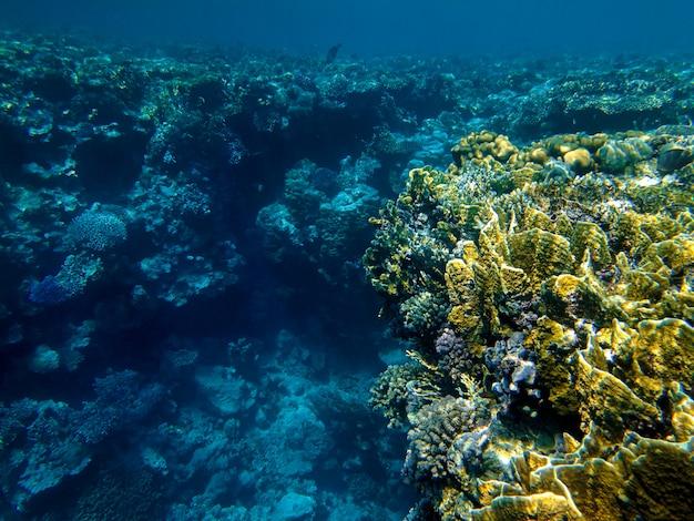 紅海の美しいサンゴ礁
