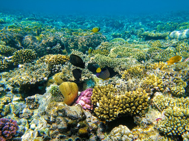 Beautiful coral reef in the red sea
