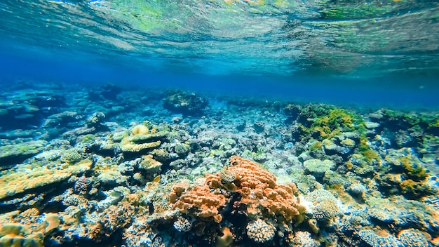 A beautiful coral reef with tropical fish swimming near it.