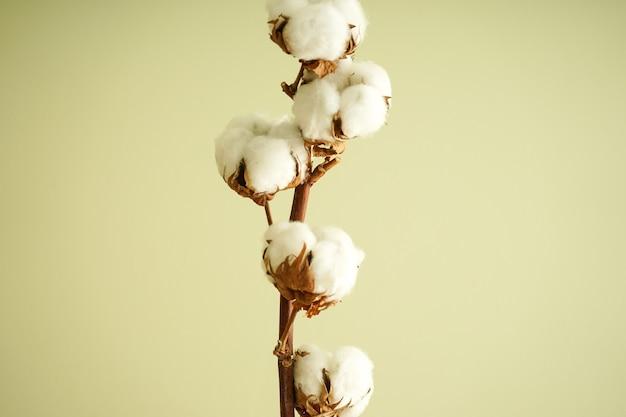 緑の壁のクローズアップの美しい綿の枝。フラットレイ。