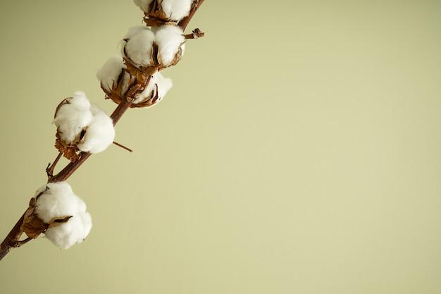 テキストのための場所と緑の壁に美しい綿の枝。フラットレイ。