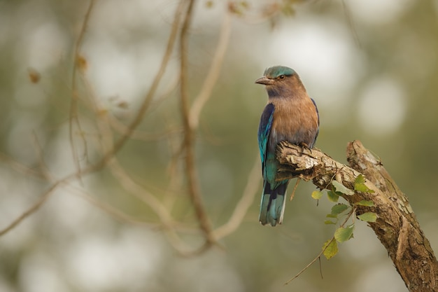 Beautiful and coulourful birds from kaziranga in india assam