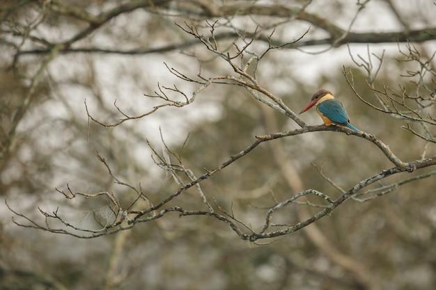 Uccelli belli e colorati da kaziranga in india assam