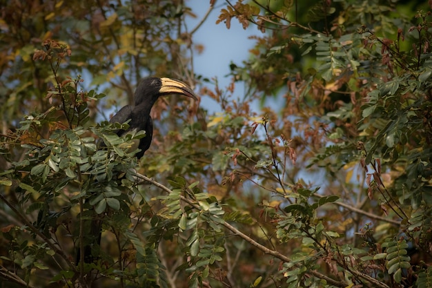 Beautiful coulourful burd in the nature habitat in african congo