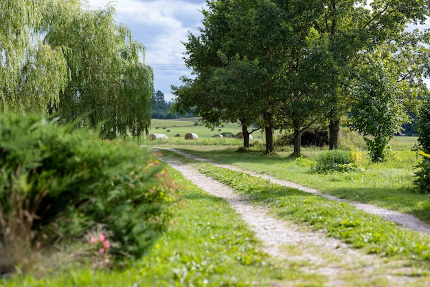 Красивая проселочная дорога, пейзаж с дорогой и деревьями