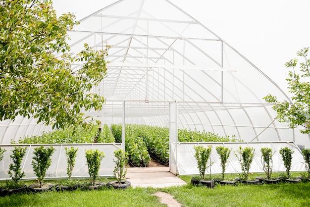 美しい田舎の温室と木