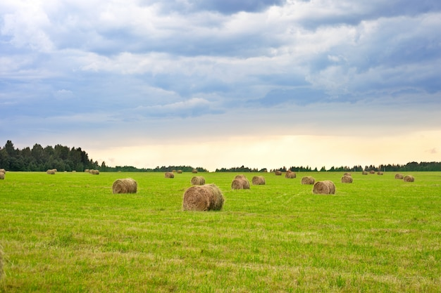 Beautiful countryside landscape on the background of a cleaned field with haystacks. sunset.