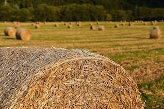 Beautiful countryside landscape. Hay bales in harvested fields. Czech Republic - Europe. Agricultura