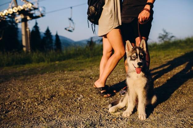 美しいカップルと丘の中腹に夕日を見ている犬
