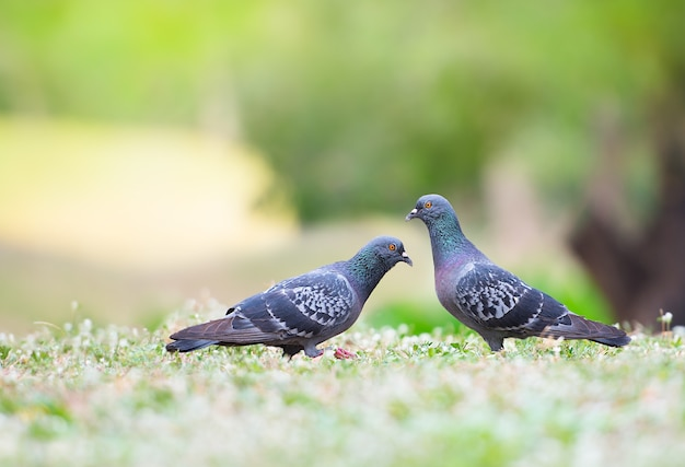 Beautiful couple bird in the natural park