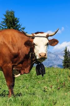 フランスアルプスの風景の中の美しい牛
