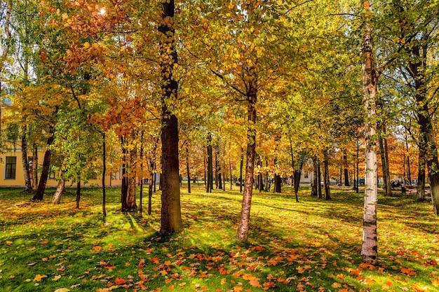 Красивый уютный осенний пейзаж в парке с разноцветными листьями в солнечный день