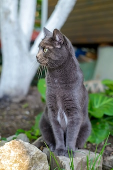 Красивый милый темно-серый кот сидит в летнем саду