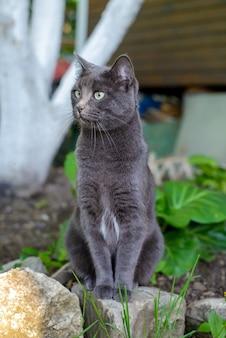 Beautiful cute dark gray cat sitting in the summer garden
