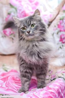 Красивый милый пушистый серый кот на диване у себя дома