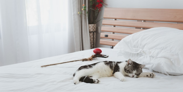 A beautiful  and cute ginger cats sleep on white bed