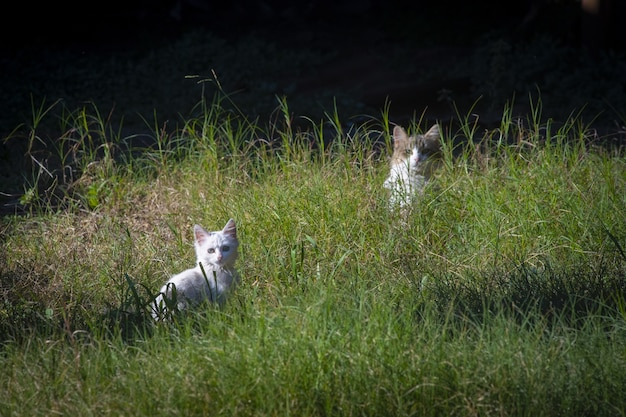 Beautiful cute white kitten and mother cat on green grass
