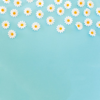 Beautiful daisies on blue background with copy space at the bottom