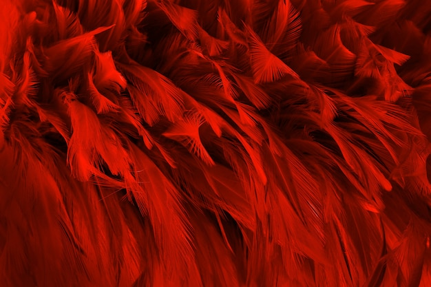 Beautiful dark red bird feathers pattern texture background.