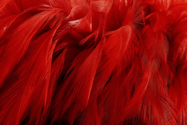 Beautiful dark red feathers texture background.