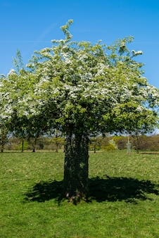 Beautiful day in the park with bloomong tree