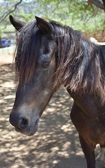Bella giornata con un dolce giovane cavallo marrone.
