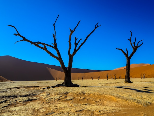 Beautiful dead trees on white clay pan in desert landscape of deadvlei, sossus, namibia