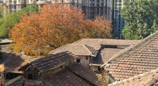 秋の季節には美しい落葉樹