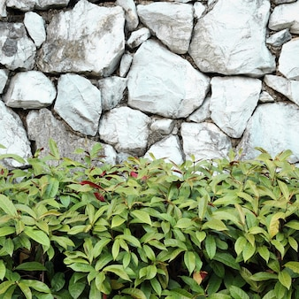 Beautiful decorative plant on the stone wall