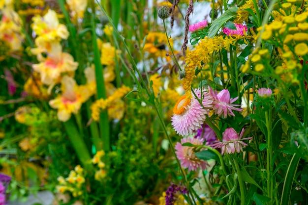 아름다운 장식 식물과 꽃. 자연 배경입니다.