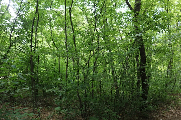 緑の葉の美しい深い森
