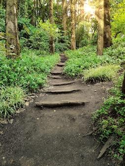 緑の茂みと葉に囲まれた、木製の針葉樹林の真ん中に木でいっぱいの美しい深い道の小道