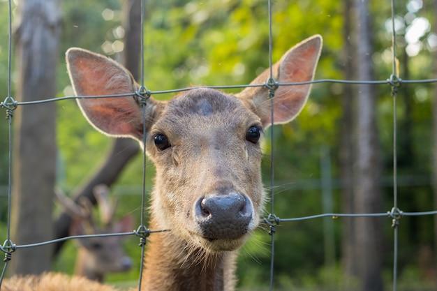 Beautiful deer in zoo