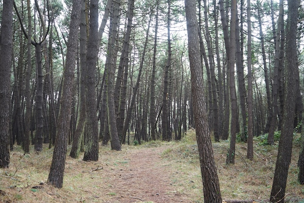 Bella fitta foresta con molti alberi ad alto fusto