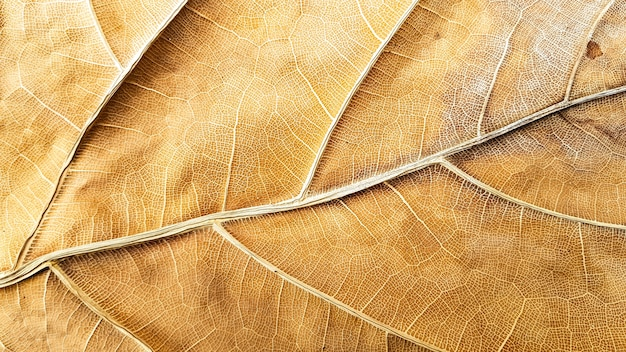 Красивый деталь, сушеные листья текстуры и картины.