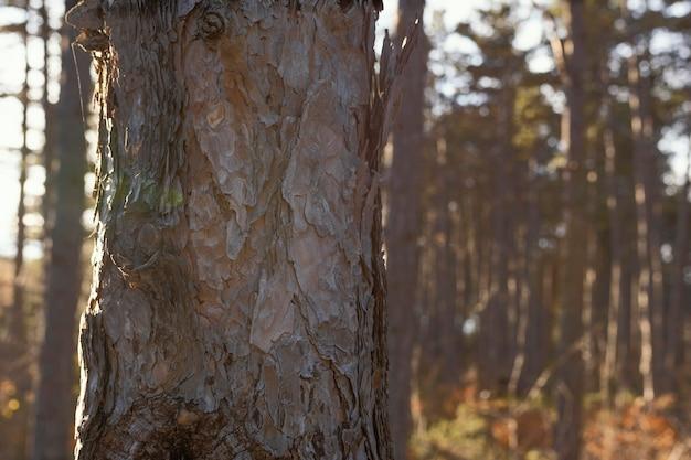 야생 숲의 아름다운 세부 사항