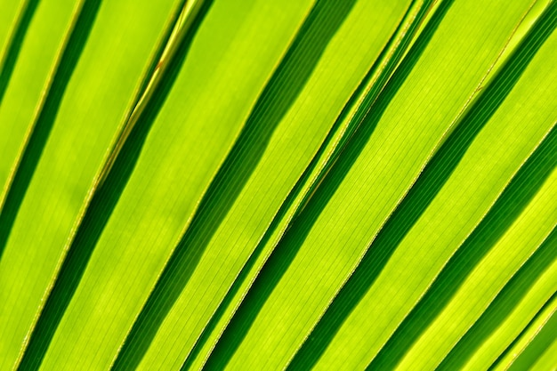 Beautiful detail of the palm leaf