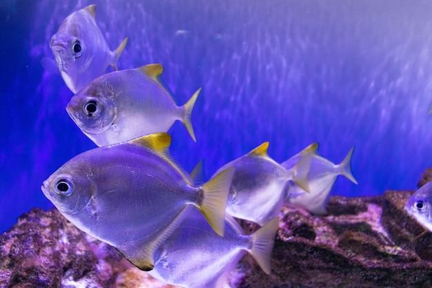 Beautiful different fish inhabitants of the ocean in the aquarium