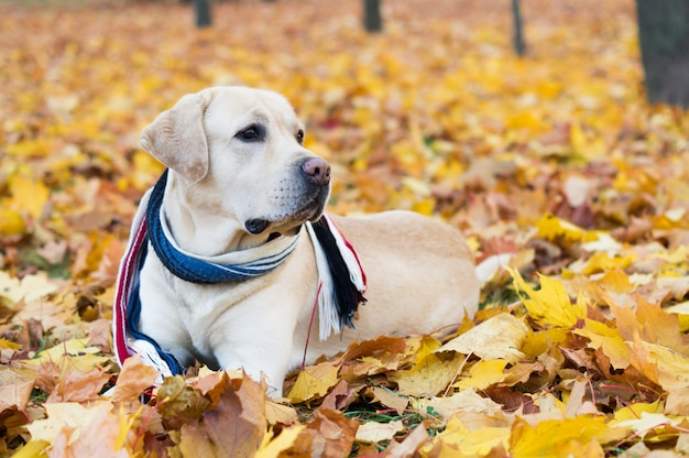 Beautiful dog in autumn leaves
