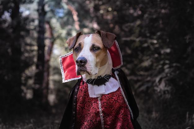 Красивая собака, одетая как вампир в темном залитом луной лесу. симпатичный щенок стаффордширского терьера в хэллоуинском костюме страшного вампира в лесу, снятый в низком ключе