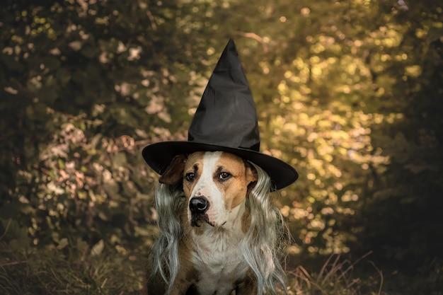 フレンドリーな森の魔女にハロウィーンの格好をした美しい犬。帽子と秋の自然の森の背景に灰色の髪の衣装でかわいいスタッフォードシャーテリア