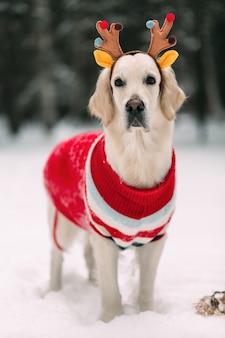 Красивая собака в блузке и оленьих рогах смотрит в камеру