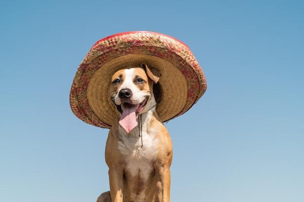 햇볕이 잘 드는 야외 배경에서 멕시코 전통 모자에 아름 다운 개. 멕시코 축제 상징으로 또는 할로윈을 위해 챙 넓은 모자를 차려 입은 귀여운 재미있는 스 태퍼 드셔 테리어