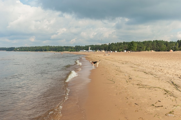 水の近くのビーチを歩く美しい犬