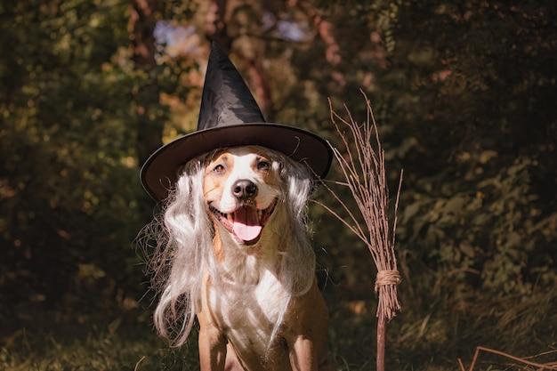 ほうきの柄の美しい犬は、フレンドリーな森の魔女としてハロウィーンに扮しました。秋の森の魔女のほうきで仮面舞踏会衣装のかわいいスタッフォードシャーテリア子犬の肖像画