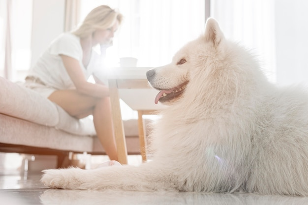 Beautiful dog and women in house