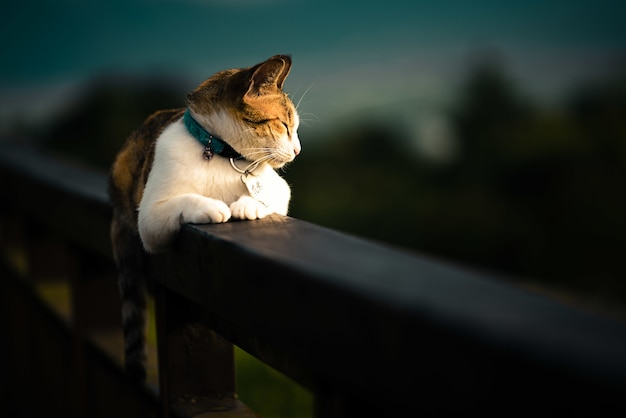 Beautiful domestic cat laying on a fence