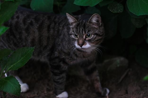 Красивая домашняя кошка гуляет среди зеленой травы