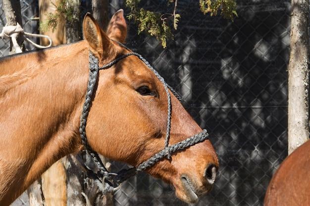 Красивые домашние лошади в аргентинской деревне